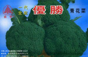 西蓝花种子——一代交配优胜青花菜