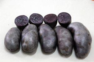 供应黑美人、黑金刚、红玫瑰土豆种子