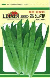 供应香油麦—莴苣种子