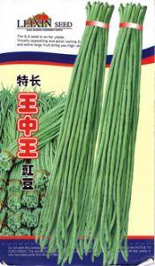 供应特长王中王—豇豆种子