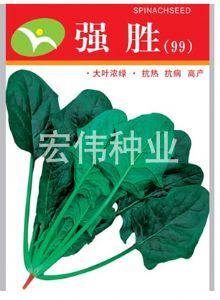 供应强胜—菠菜种子