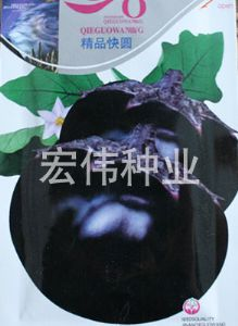 供应精品快圆—茄子种子