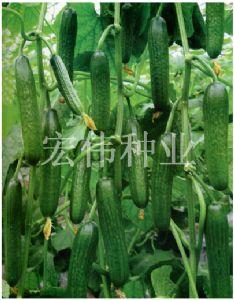 供应83-16—水果黄瓜种子