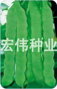 供应荷兰双宽芸豆——菜豆种子