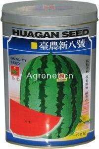 供应台农新八号—西瓜种子