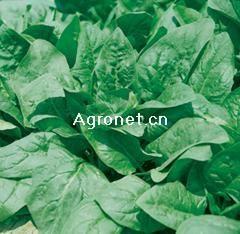 供应万盛全能-菠菜种子