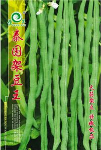 供应泰国架豆王——架豆种子