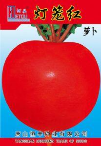 供应灯笼红——萝卜种子