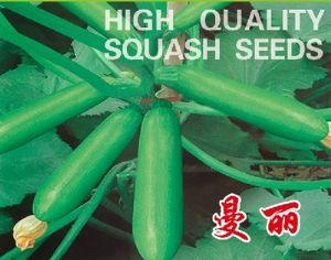 供应曼丽——西葫芦种子