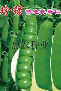 供应珍绿长寿仁—豌豆种子