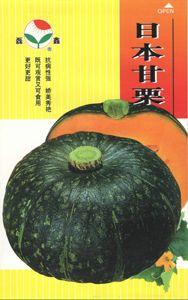 供应日本甘栗—南瓜种子