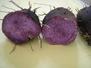 供应紫色山药种苗