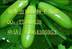 供应冬秀西葫芦种子