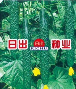 供应日出丽春—黄瓜种子