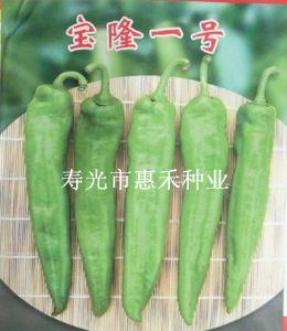 供应宝隆一号—辣椒种子