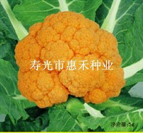 供应黄金花菜—花椰菜种子