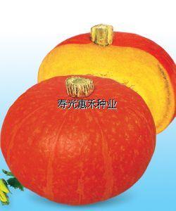 供应韩国高档金红栗南瓜种子