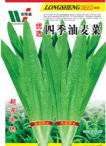 yabo80四季油麦菜—油麦菜种子