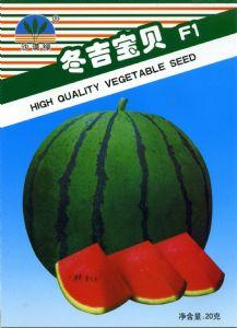 yabo80冬吉宝贝F1—西瓜种子