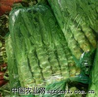 求购蔬菜莴苣