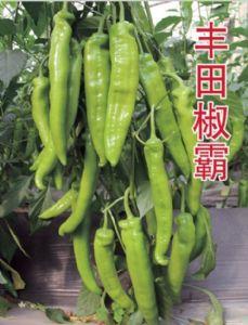 供应丰田椒霸—辣椒种子