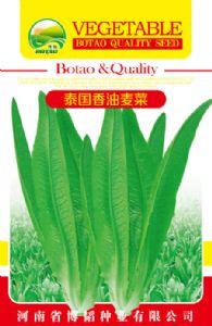 供应泰国香油麦菜—油麦菜种子