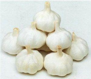 供应秋季早熟脱毒大蒜种子