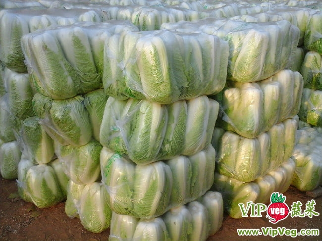 白菜果实结构图