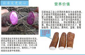紫玉淮山和紫玉淮山种苗