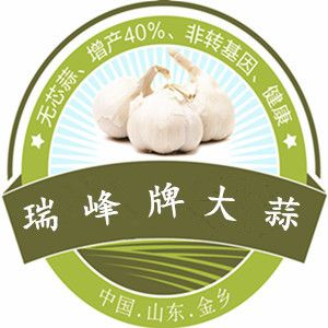 瑞峰无芯蒜---抗病害抗重茬  增产36%