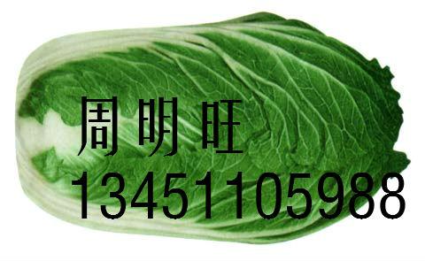 湖北咸宁嘉鱼_白菜大量上市了