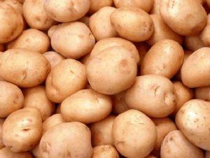 求购洋芋马铃薯