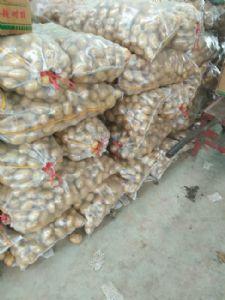 荷兰十五土豆大量供应