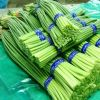 优质冷库蒜苔大量供应