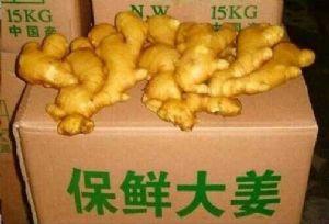 大黄姜 生姜产地姜批发