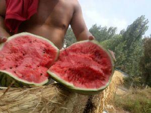 河南西瓜大量上市了 品种齐全