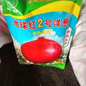 早熟洋葱种子yabo80 地球红2号