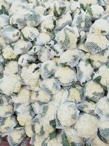 山东肥城有机花菜,菜花大量供应,白面青梗松花菜