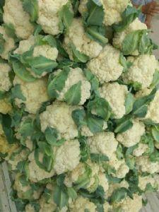 山东菜花,有机花菜大量供应
