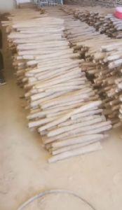 新鲜优质白玉山药大量供货