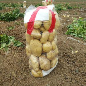 新鲜土豆正上市