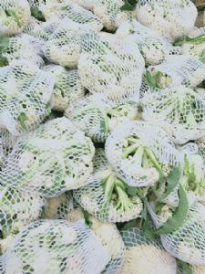 大量供应青梗松花菜,有机花菜