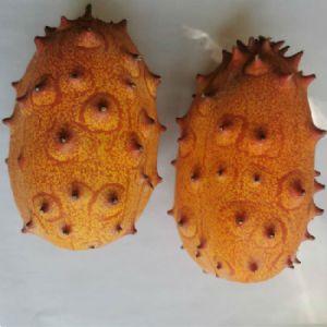 火星果种子 火参果 海参果 非洲黄瓜 金刺猬种子