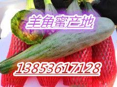 山东潍坊甜瓜产地 羊角蜜甜瓜批发